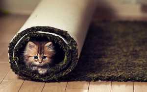 giornata del gatto - piccolo-gatto nell tappeto - irana tappeti persiani